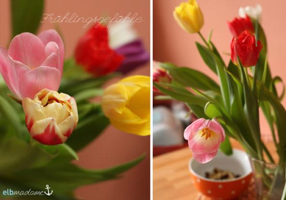fruehling tulpen