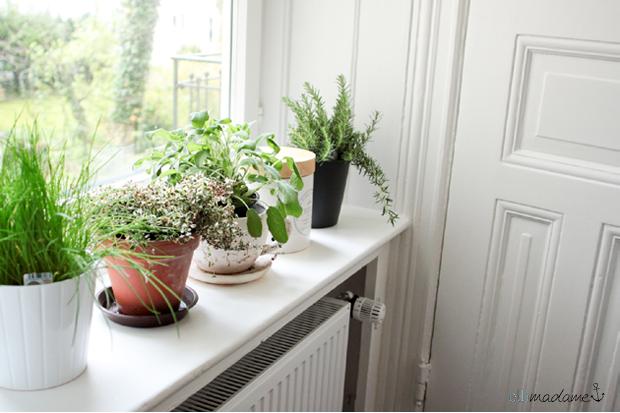 Küche Kräuter Fensterbank