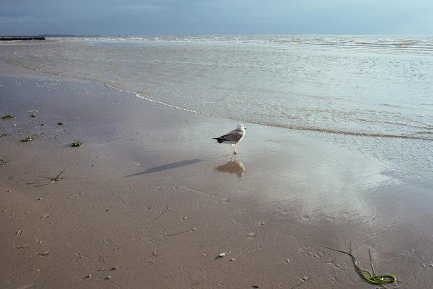 fehmarn strand flügge