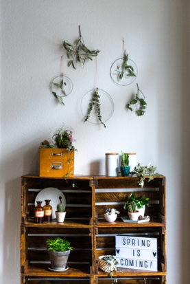 DIY Frühling Pflanzen