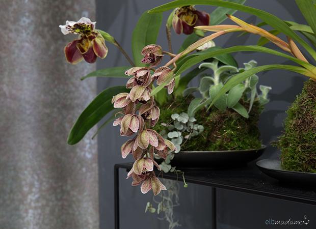 dekorieren mit pflanzen moosb lle mit orchideen selber basteln. Black Bedroom Furniture Sets. Home Design Ideas