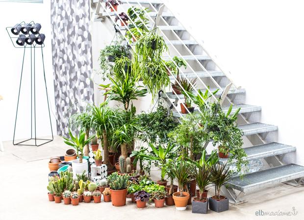 Pflanzen-Arrangement