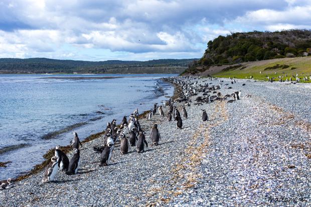 Ushuaia Estancia Haberton Pinguine Piratours