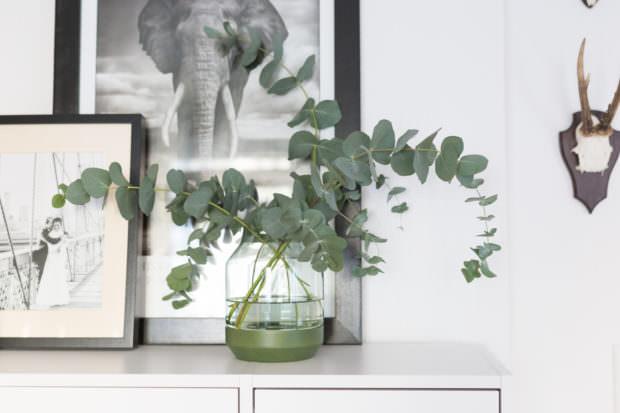 Eukalyptus auf Sideboard