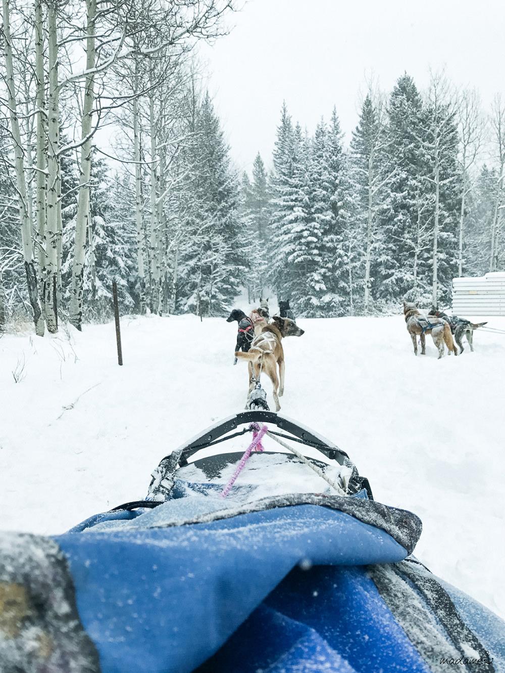 Hundeschlitten fahren in Kanada