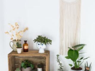 Alte Obstkiste mit Pflanzen dekoriert, Makramee an der Wand.
