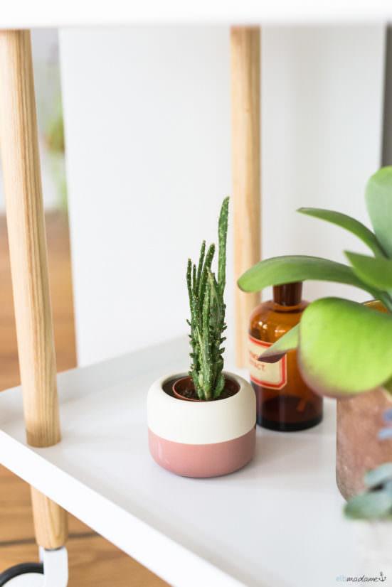 Kleiner Kaktus im Blumentopf
