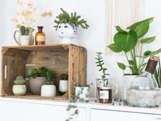 Monstera, Leuchterblume und andere Sukkulenten als Dekoration