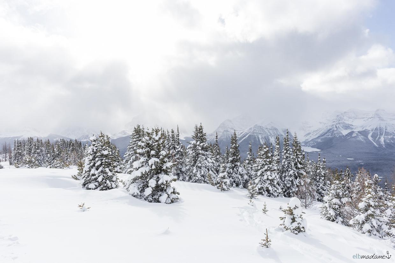 Lake Louise Kanada Alberta Reisebericht