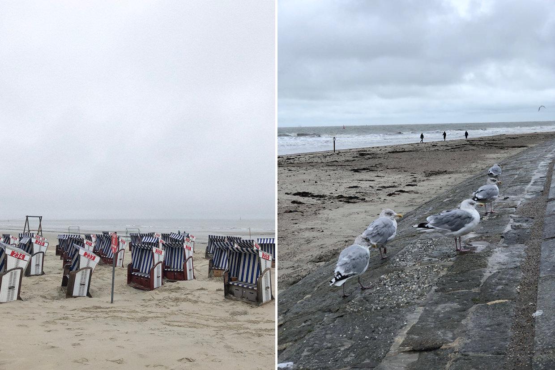 norderney strandkörbe möwen
